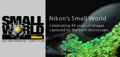 Nikon Small World